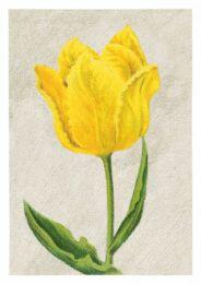 Tulip Mon Trésor