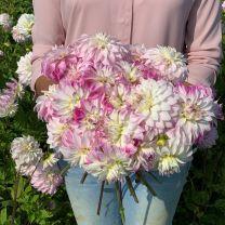 Dahlia Pink Petticoat