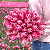 Tulip Milkshake