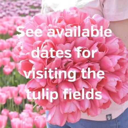 visit tulip fields
